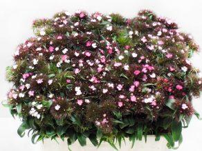 Barbienne Appelblossum